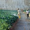 Good Pay Luring Illegal Immigrants To Cameron Highlands In Droves