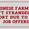 Chinese farmers left stranded at airport due to bogus job offers