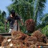 MTUC urges India, Malaysia to set aside ego and resolve palm oil ban
