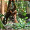Donate fruits, vege or meat, Zoo Negara appeals to public